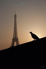 Eiffel tower at 5am (mistemoon) Tags: bw orange paris france beautiful canon blackwhite amazing postcard eiffeltower picture collection lumiere toureiffel parisian photopostcard mistemoon potateyes