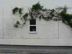 Vine window sign (shaggy359) Tags: road street cambridge white house plant window sign wall pavement picture vine sidewalk stanley frame cambridgeshire cambs roadsigh