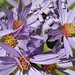 Photo tagged with Smoothaster