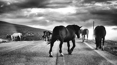 Walk On (Alessandro*Passerini) Tags: wild horse mountain wildlife campo abruzzo imperatore