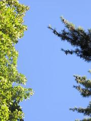 Laub trifft Nadel (nathaliero) Tags: nadelbaum laubbaum