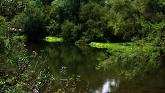 vicini alla sorgente (lele orpo) Tags: river sardinia gh1 cedrino neulè ecoparco