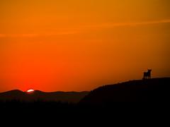 Quemando el cielo (_Zahira_) Tags: sunset sky orange sun black sol lafotodelasemana atardecer negro olympus cielo silueta naranja toro ngr e500 uro ltytr1