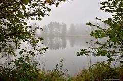 Foggy sunday morning (JSB PHOTOGRAPHS) Tags: morning tree water grass leaves oregon pond sunday foggy eugene autzen dsc1294