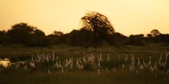 Namibia 2013 (guido.menato) Tags: africa animals desert dunes pan namibia etosha windhoek swakopmund sousuvvlei