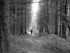 Moody Arran Forest Trails
