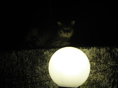 gatto veggente (terevinci) Tags: lamp cat gatto futuro bighead testone palladivetro veggenza