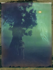 Entrance (Bastiank80) Tags: world camera trees color film nature field misty analog polaroid living woods being foggy large entrance days human instant 4x5 sheet format another expired 59 wista bastiank