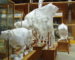 Museum closed for renovation :( (Helen in Wales) Tags: sad oxford naturalhistorymuseum week40 52in2013 skeletonswrappedinplasticsheeting