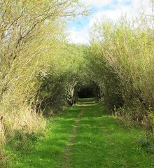 Tree tunnel & willows - The Gearagh, Co. Cork (JulieK (busy ++ trying to catch up with comments)) Tags: trees ireland sky cloud green beautiful grass landscape arch view path cork willow lush treetunnel pathscaminhos thegearagh ilobsterit