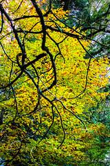 IMG_1149 (moutoons) Tags: fruit jaune automne rouge eau couleurs rivière pont porte nuage gorges tarn marron cascade arbre château champignon brume verte pomme croix feuille poire légume quézac lozère cévennes coing ispagnac