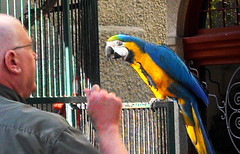 Parrot at the Mission Hotel (beaucon) Tags: california pet man bird animal friendship riverside free parrot cage handfed missionhotel