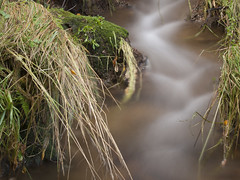 Ungilde (Edubecerras) Tags: agua kdd seda setas ungilde