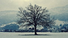 The Tree (FlavioSarescia) Tags: travel trees winter snow forest landscape switzerland