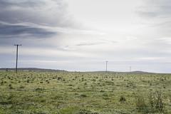 Morning (Jess-Turner) Tags: morning blue sky green grass sunrise landscape dew powerpole canondslr