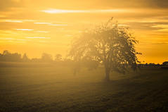 Backlight Tree (m@yphotos) Tags: trees light orange plant tree green nature backlight germany landscape deutschland licht nikon europa europe availablelight natur pflanze meadow wiese grn landschaft bume baum goldenhour backlighting gegenlicht weinheim badenwrttemberg d90 hemsbach goldenestunde verfgbareslicht mygearandme blinkagain vision:mountain=0521 vision:sunset=0821 vision:sky=0893 vision:clouds=0716