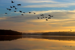 I'll fly with a little help from my friends (Sam0hsong) Tags: sunrise reflections geese day cloudy lakes northcarolina lakecrabtree happynewyear partlycloudy wsweekly64