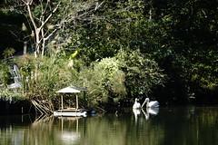 GREEN-WORLD (ddsnet) Tags: bird birds zoo sony hsinchu taiwan 99    slt    peipu greenworld bird  zoo zoobird   singlelenstranslucent 99v