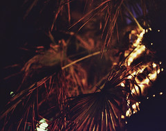(^ autumn deluded) Tags: street light tree film night 35mm canon vintage landscape photography lights haze outdoor grain streetphotography palmtrees photograph 35mmfilm nightlife grainy expired filmgrain expiredfilm filmphotography