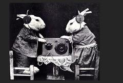 Harry Whittier Frees-  radio  rabbits   -  (12) (janwillemsen) Tags: photography pups kittens 1914 harrywhittierfrees