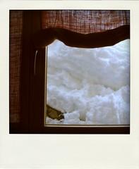 Panorama alternativo (Cristina Birri) Tags: snow window finestra neve ristorante friuli udine fornidisopra varmost lasuita