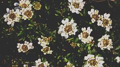 DSC08856 (I. AKHTAR) Tags: life travel flowers summer plants cold nature beautiful fashion youth butterfly garden photography rebel natural grunge explorer teenagers teens lifestyle pale adventure lightleak explore teen indie filmschool greenery lush boho cinematic disposable artschool artstudent filmstudent tumblr photographylife photographersontumblr originalphotographers iakhtar ikywork