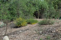 140320_3632.jpg (Weeding Wild Suburbia) Tags: park gardens publicgardens spnp