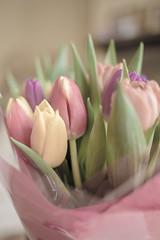 Tulips washed (Vishca) Tags: flowers stilllife flower nature garden tulips tulip inspiredbylove pastelcolours bulbsandbuds