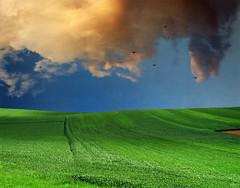 Landing (Katarina 2353) Tags: light shadow sky cloud plant green nature field grass birds landscape spring image outdoor fields katarinastefanovic katarina2353 serbiainspired