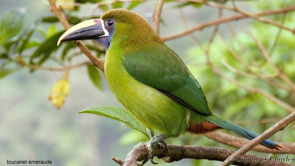 oiseau Martin 6 avril trouvé par Martine - Page 2 32465431874_cba2bd7e29_b