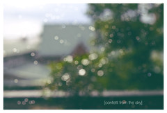 confetti from the sky (Anita Waters) Tags: raindrops dew home narrabeen bokeh