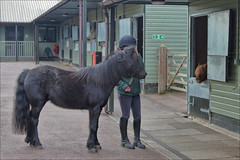 Squiggy and Fidget (meniscuslens) Tags: squiggy fidget rehome rescue charity pony horse trust groom stable yard shetland mini