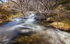 Guthega flow (Rod Burgess) Tags: guthega kosciuszko nsw australia canon5dmkii canon1635f4l creek kosciuskonationalpark longexposure milkywater rocks river eucalypt