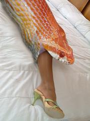 snake6 (tallteeth711) Tags: vore feet fetish legs damsel vorevids shoop snake fishvore toes nylons stockings
