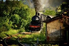 Il Treno Natura! (Antonio Cinotti ) Tags: train vintage nikon smoke railway siena carbon treno fumo d60 binario natire locomotiva carbone nikond60 trenoavapore trenonatura