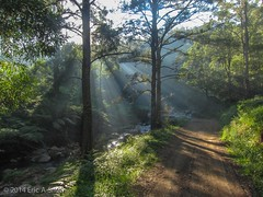 God's Light (esmith132) Tags: sydney australia bluemountains newsouthwales sixfoottrack