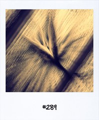 "#Dailypolaroid of 5-7-13 #289 • <a style=""font-size:0.8em;"" href=""http://www.flickr.com/photos/47939785@N05/9262606235/"" target=""_blank"">View on Flickr</a>"