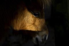 Beauty of horse (Tash66) Tags: horse nature beauty canon eyes 100mm 7d photographyforrecreation