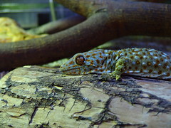 (samuel_wkip) Tags: olympus sample reptilehouse tuenmunpark  flickrandroidapp:filter=none xz10  tuenmunparkreptilehouse xz10sample