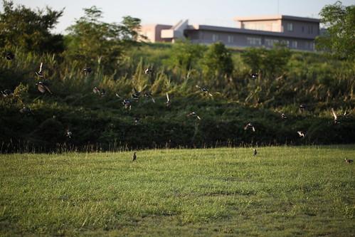 群れをなす鳥たち