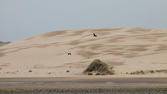 Great Dune. (northernkite) Tags: sea water river coast sand dune north shoreline fresh estuary cormorant