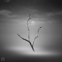 Still standing in the Silence (Shahrulnizam KS) Tags: ocean lighting wood blackandwhite bw cloud seascape black tree art abandoned beach nature water monochrome square dead photography blackwhite movement exposure die fineart extreme fine smooth tranquility le squareformat simplicity malaysia slowshutter split twigs treebranches minimalist tranquil johor silky lansdscape mistic colourless gettyimage cropsquare nd400 d90 straitsofmalacca malaysianphotographer nikond90 senggarang selatmelaka silverefexpro extremelongexposure sungailurus pantaisungailurus kacasilau