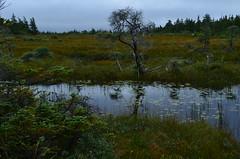 Cabot Trail Bog (Sheri Fresonke Harper) Tags: novascotia photograph bog cabottrail