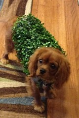 "Chia Pet Winston Wright • <a style=""font-size:0.8em;"" href=""http://www.flickr.com/photos/72564046@N04/10598465425/"" target=""_blank"">View on Flickr</a>"