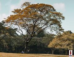 Man Sitting Under the Tree (ilusyonimages) Tags: park city autumn summer man tree asian photography asia sitting philippines stock illusion global bonifacio taguig ilusyon