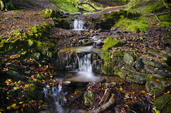3 steps (ne1l34) Tags: longexposure forest woodland waterfall moss nikon mystical nikkor filters cwmbran uknature tamron1750 d7000 blaenbran