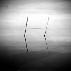 / / (Sartori Simone) Tags: italien sky italy reflection beach water geotagged lomo europa europe italia cielo lubitel2 lubitel acqua spiaggia italie riflesso veneto conche venicelagoon allrightsreserved lagunadivenezia simonesartori 2 piovini