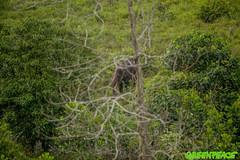 GP04UZM (Greenpeace International) Tags: trees green beauty elephants nationalparks biodiversity forestscampaigntitle foreststopography