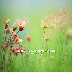 grassflowers, 2014 jehovah's witnesses yeartext for ipad, ipadmini, iphone, ipod, android wallpaper BAHASA
