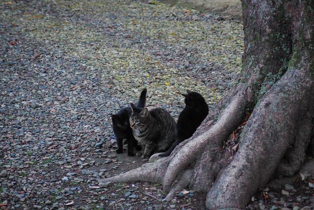 Today's Cat@2014-02-08